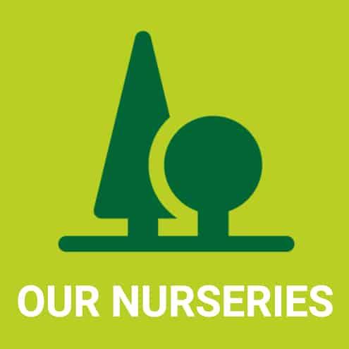 icon-nurseries-porcellato-srl-italy