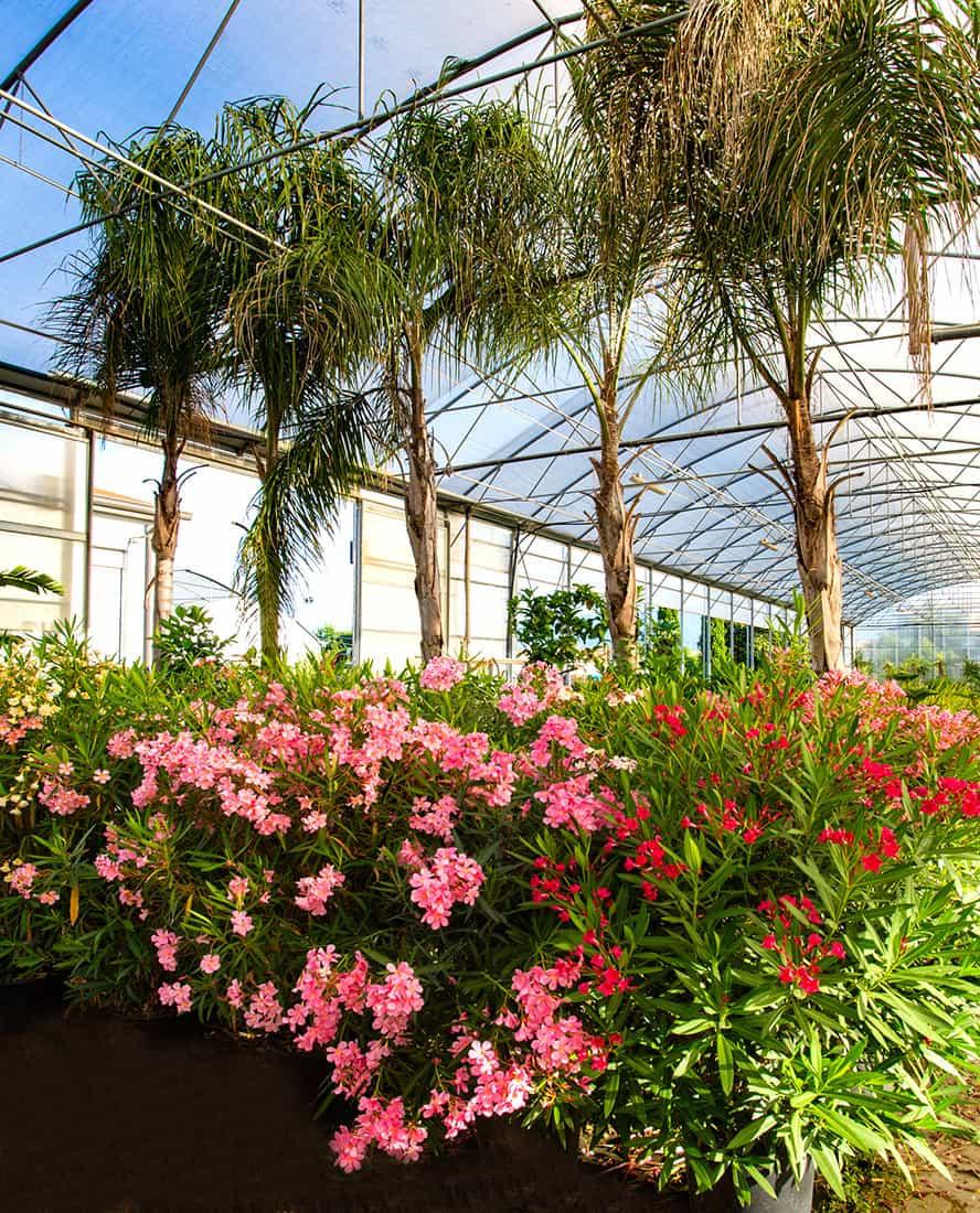 vivai-piante-ornamentali-loria-pistoia-porcellato-srl-jury-barbara-arianna-01