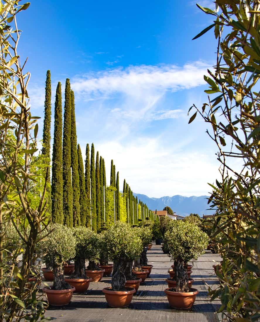vivai-piante-ornamentali-loria-pistoia-porcellato-srl-jury-barbara-arianna-02