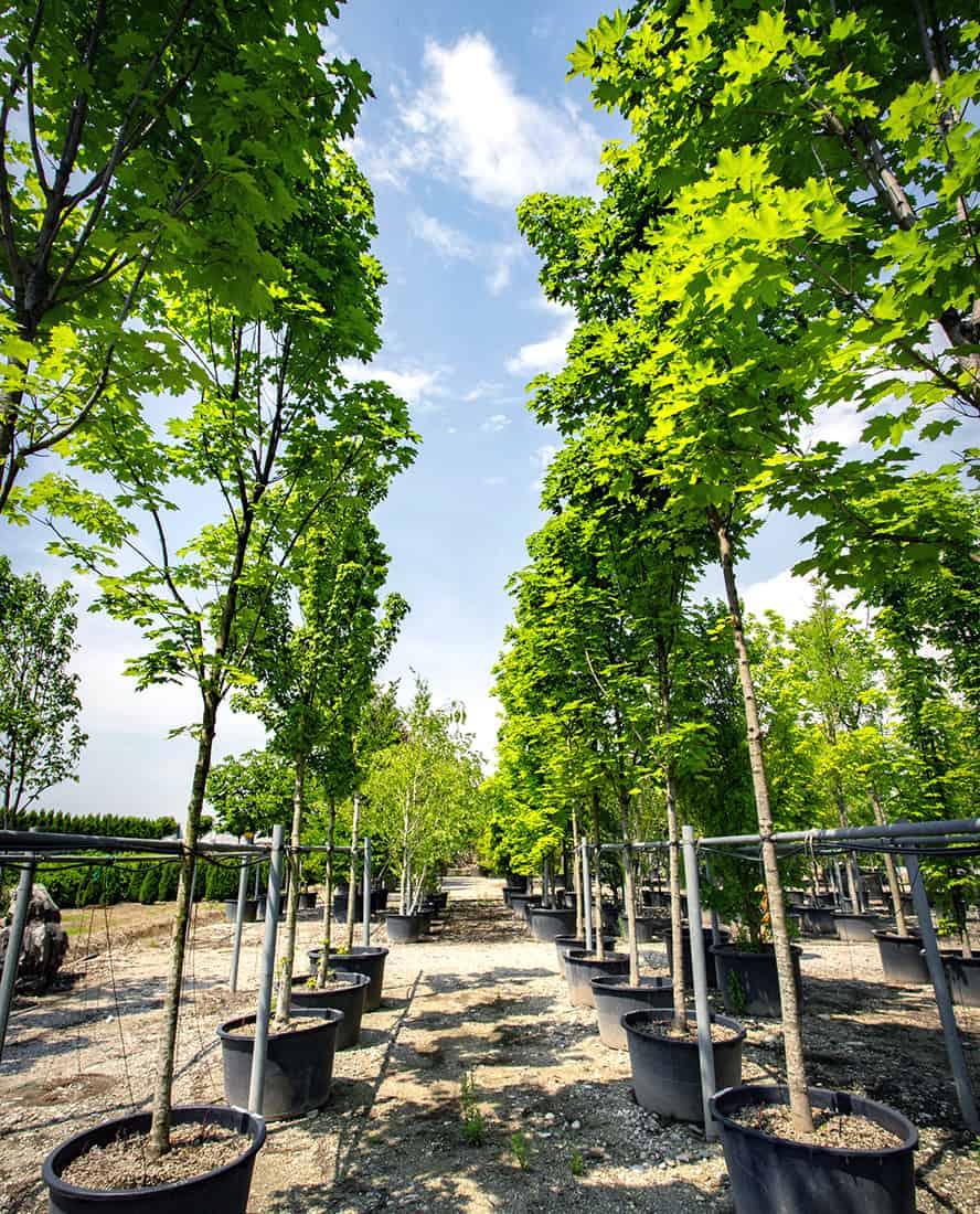 vivai-piante-ornamentali-loria-pistoia-porcellato-srl-jury-barbara-arianna-04